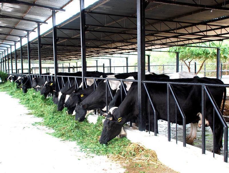 Dairy-business-Pakistan